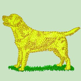 Labrador - Yellow/Golden (WD130Y)